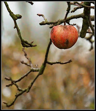 Photo: 26. december 2011 - Det sidste æble