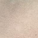 Mycena spores