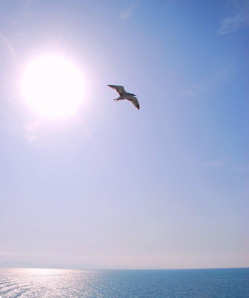 libero nel cielo di lando
