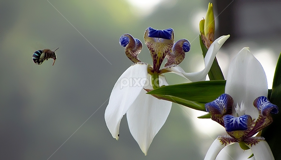 let's go!! by Ateddi S - Nature Up Close Flowers - 2011-2013