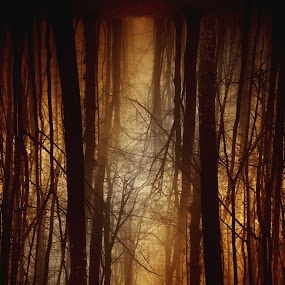 The passage by Anne-Cecile Pflieger - Landscapes Forests ( scary, creepy, pathway, forest, woods, foggy, annececilegraphic, tree, fog, path, dark, trees, brown, light, black, misty, mist )