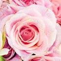 Rose Live Wallpaper icon