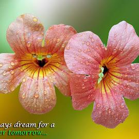 Always dream.. by Asif Bora - Typography Quotes & Sentences
