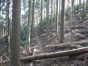 登山道は左へ