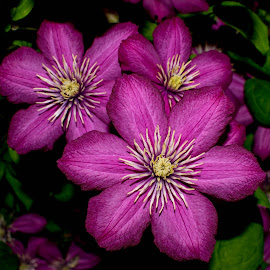 purple 3 by Ira Mdt - Flowers Flower Gardens ( #green, #purple #flowers #closeup #details,  )