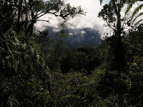 Photo: Cloud forest.