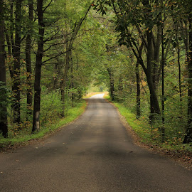 Rustic Road 49 by Amy Sauer - Landscapes Forests