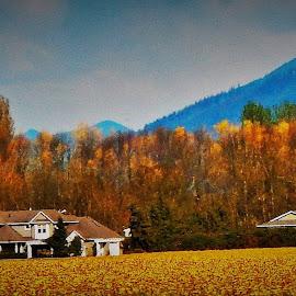 golden fields by Lavonne Ripley - Landscapes Prairies, Meadows & Fields