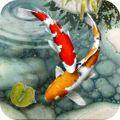 Fish Live Wallpaper Free Koi Fish Backgrounds Hd Apps On Google Play
