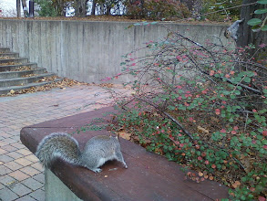 Photo: A squirrel sitting so close I could've touched it