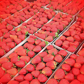 Miles of Luscious Strawberries by Eric Michaels - Food & Drink Fruits & Vegetables ( red, pattern, farmer's market, afternoon, sunny, strawberries, repeat, vignette,  )