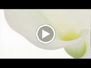 Video: A. Vivaldi  Concerto for viola d'amore, strings   b.c. in D minor (RV 393) -