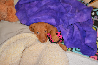 Photo: All tucked in and ready for her nap