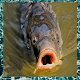 Download Angling Videos For PC Windows and Mac