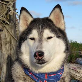 selfie  by Bjarklind Þór - Animals - Dogs Portraits