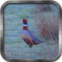 Pheasant Live Wallpaper icon