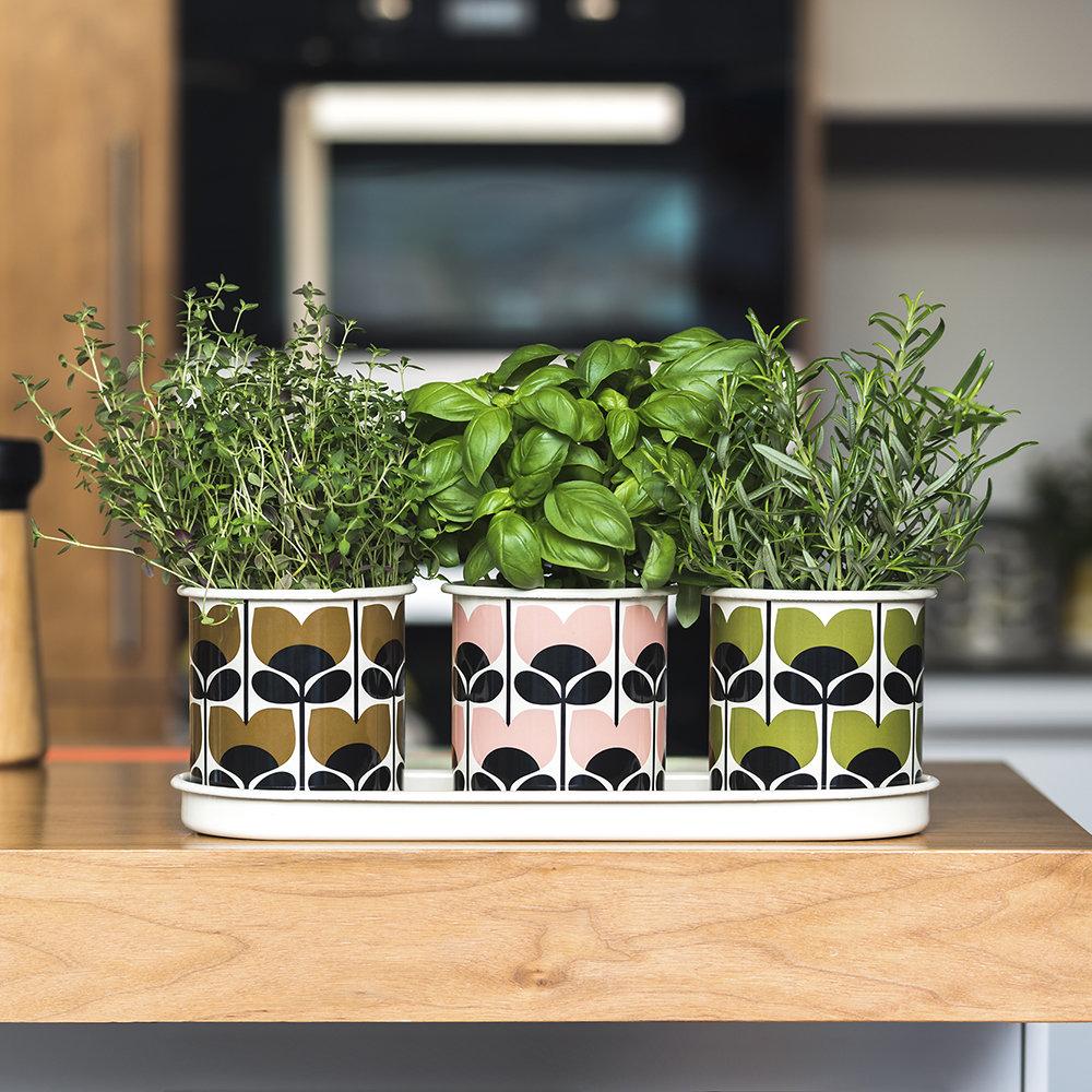 سبزیجات در گلدان