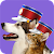 Pet Parade file APK for Gaming PC/PS3/PS4 Smart TV
