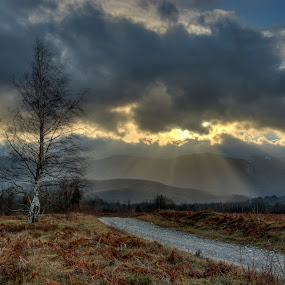 by Marin Mavra - Landscapes Prairies, Meadows & Fields ( clouds, nature, tree, pathway, cloudscape, cloudy, landscape photography, light trails, nature photography, beauty in nature, landscape, sun )