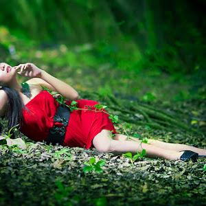 Red Rose Behind The Leafy Shade_pixoto.jpg
