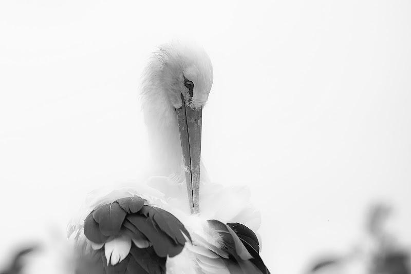 la cicogna di 𝑮𝒂𝒃𝒓𝒊𝒆𝒍𝒆 𝑷𝒂𝒓𝒅𝒊𝒏𝒊