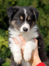 Photo: Mooie pup.
