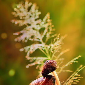 Faithful by Niin Peweel - Nature Up Close Mushrooms & Fungi ( nature up close, mushrooms & fungi )