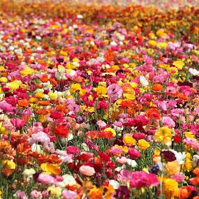by Ruben Guerrero - Nature Up Close Gardens & Produce ( pwcflowergarden )