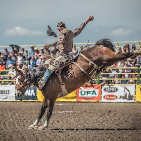 Flyin Hat At Strathmore Stampede by David Kotsibie - Sports & Fitness Rodeo/Bull Riding ( kicking, cowboy, kick, horses, jumping, horse, rodeo, bronc, sports, sport, stamepde, fair, cowboys, event, crowd )