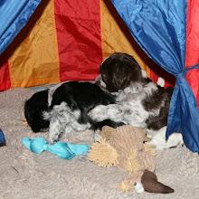Photo: Erna und Toffie im Spielzelt