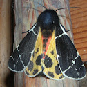 Yellow tiger moth / Медведица жёлтоватая