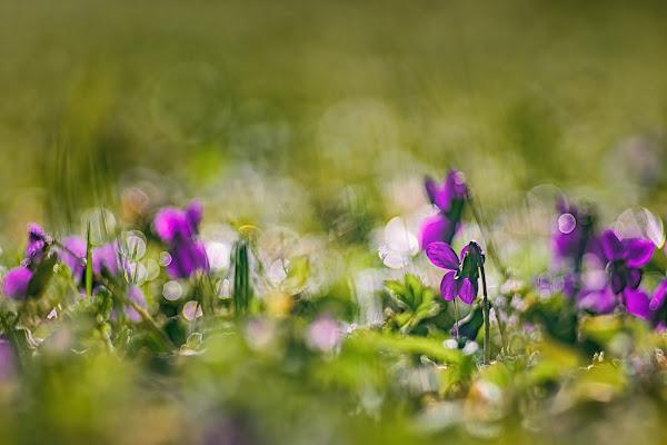 I prati vivaci di aprile di Barbara Surimi