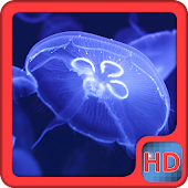 Jellyfish Video Live Wallpaper