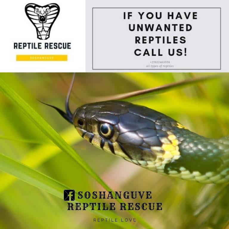 Soshanguve Reptile Rescue - Animal Rescue Service in Soshanguve
