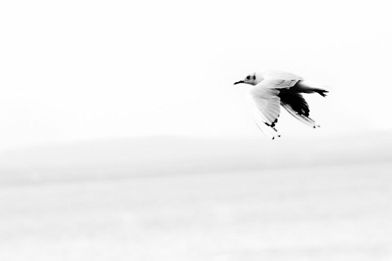 Volare di Claudio Bottini