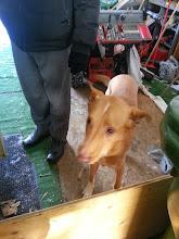 Photo: Alberts dog striker
