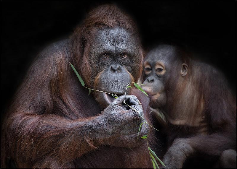 Tempo di alimentazione di Darwin