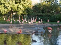Visiter Zoo de Prague
