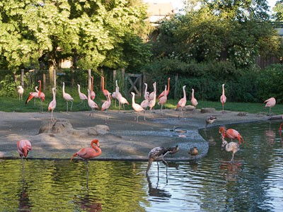 Photo Zoo de Prague