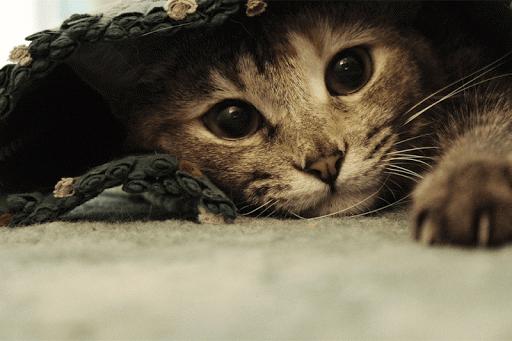 猫サウンド