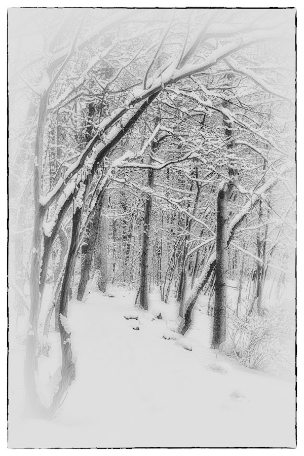 Cold ... by Veronique Aubois-Mann - Landscapes Weather ( b&w, snow, trees, new jersey )