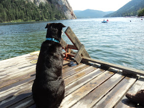 Photo: Bailey wishing he could go out with Brendan and Carmen on the pedal boat.
