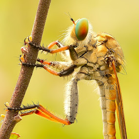 Dewe'an Maneh by Faiq Alfaizi - Animals Insects & Spiders
