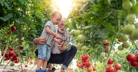 Agroponiente inicia una campaña en la que la atención al agricultor será mayor