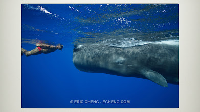 Photo: To the giants of the deep...