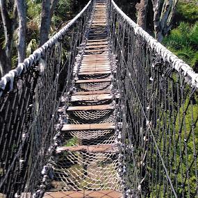 Suspended rope bridge by Barb Moore - Buildings & Architecture Bridges & Suspended Structures ( rope, wood planks, ravine, suspended, pwcbridges, bridge )