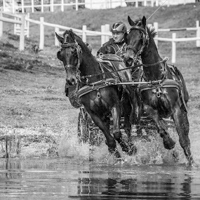 Horse race by Ricardo Marques - Sports & Fitness Other Sports ( water, horse, white, race, black, , land, device, transportation )