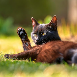 Hi.. by Silviu Zlot - Animals - Cats Portraits