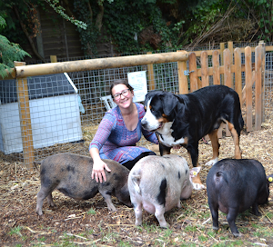 micro pig experience london