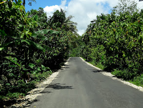 Photo: Cocoa groves along with the banana plants.
